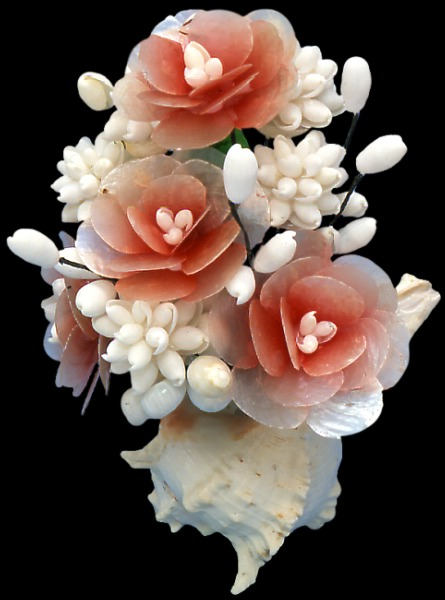 Shell flowers for What are shells made of