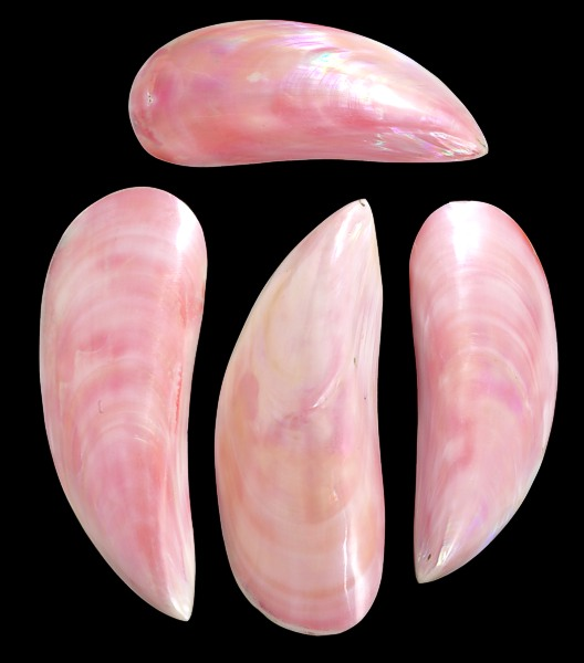 Dyed  PinkTahong Pairs   10/22/13