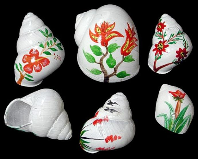 Flower Shells for Hermit Crabs  10/24/13