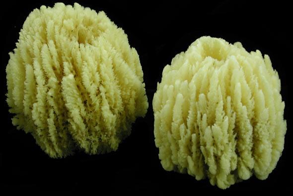 Glove Sponges