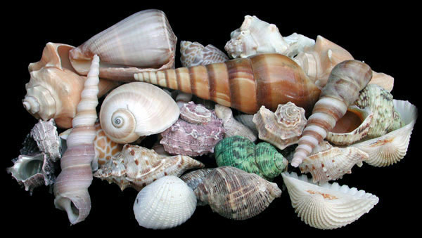 Shell Mix Medium