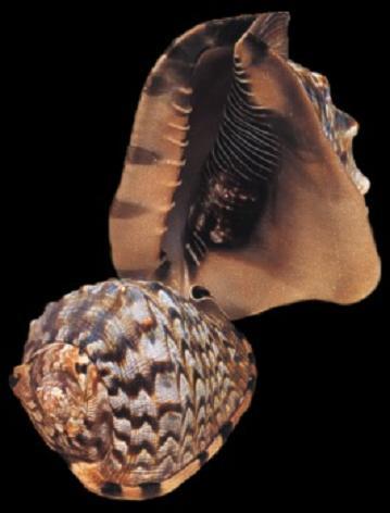 Helmet Shells