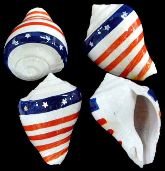 Flag 1 Hermit Crab Shells   10/24/13