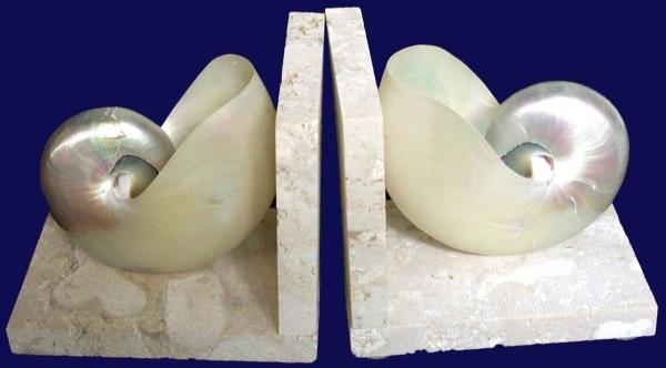 Pearl Nautilus coquina base book ends