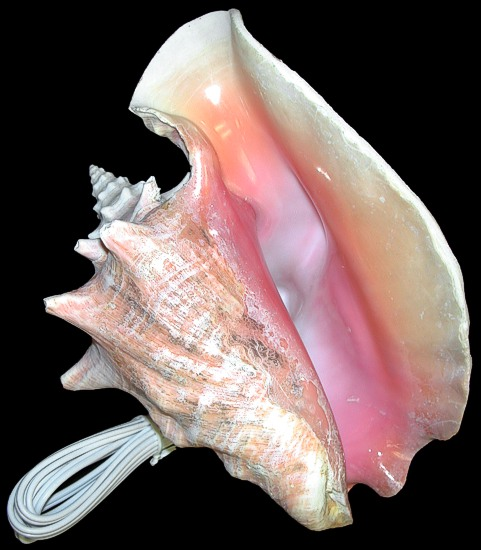 Pink Conch no Base Lamp