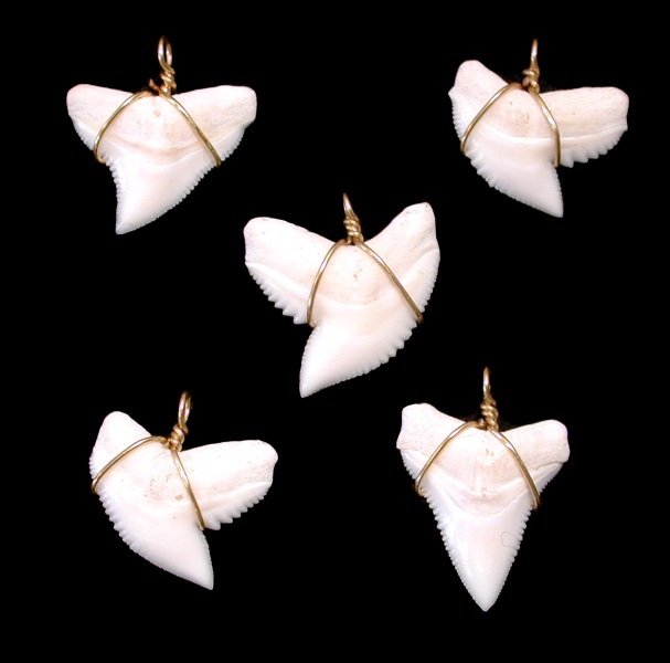 SHARK TEETH WITH GOLD WIRE
