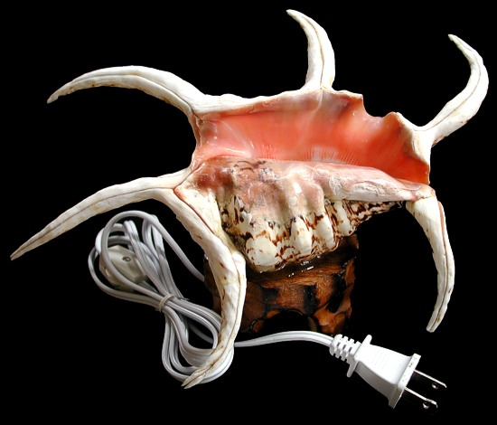 Spyder Shell Lamp