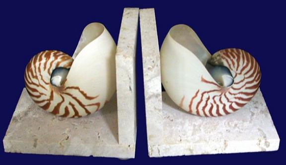 Tiger Nautilus Coquina Base Book Ends