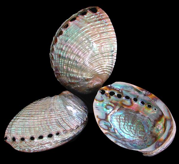 Pao-5 Silver Azule Abalone