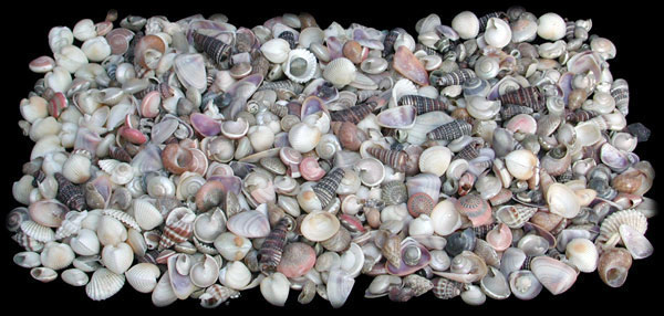 Indian Ocean Mix Tiny