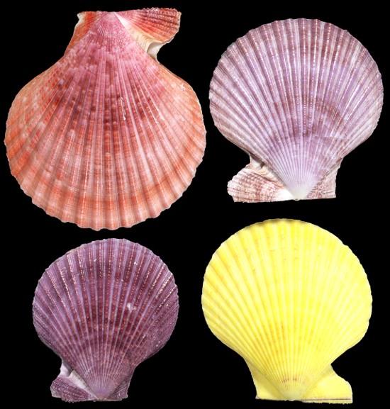 Noble Pectin Pairs Natural Colors