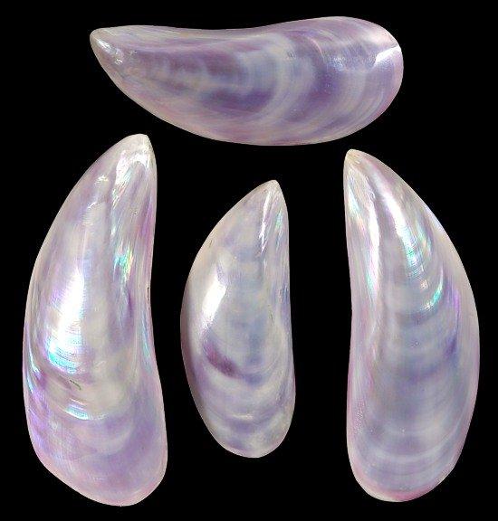 Dyed Purple Tahong Pairs    10/22/13