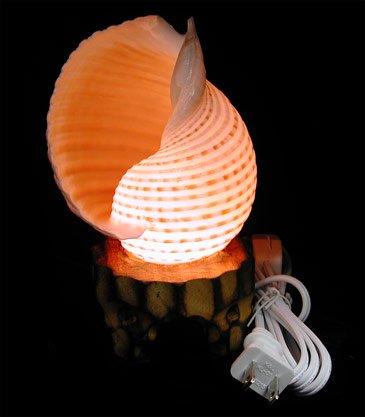 Tonna Selacosa Lamp