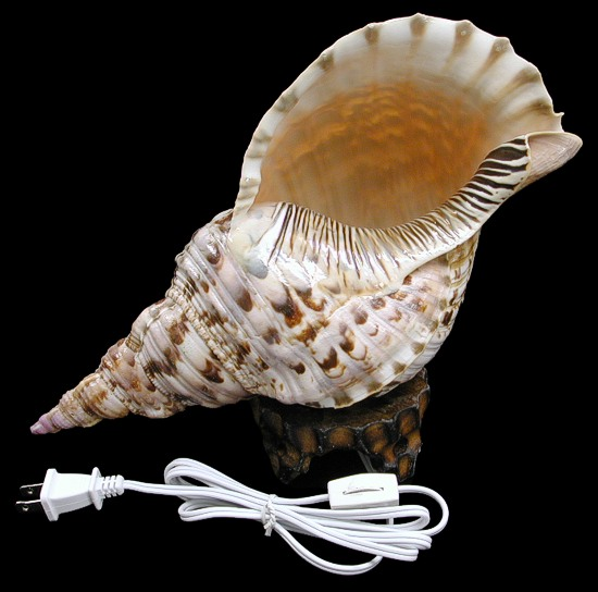 Triton Shell Lamp  3/11/14