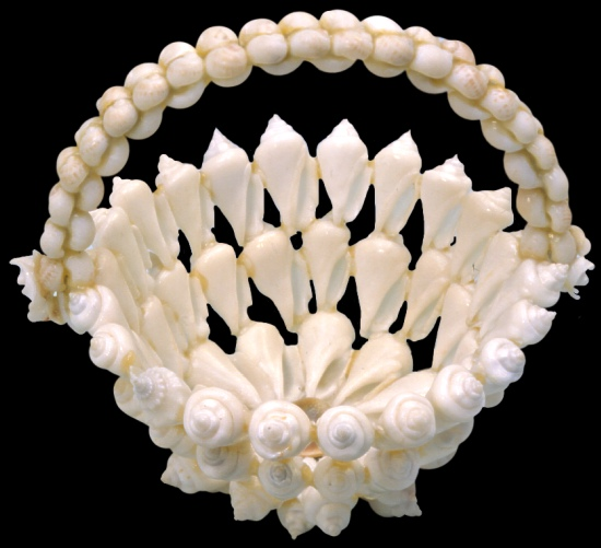 White Strombus Shell Basket